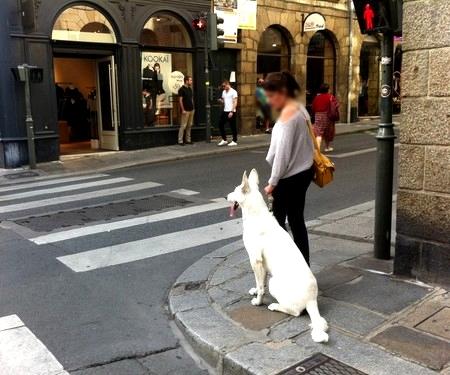travail avec éducateur canin pour améliorer l'éducation de son chien en ville