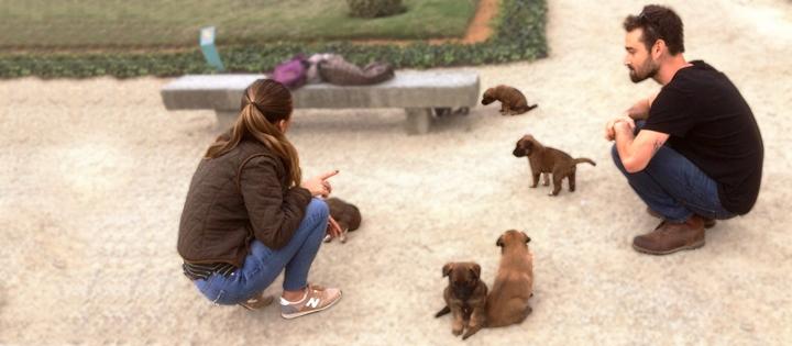 chiots_malinois_educateur_canin_comportementaliste