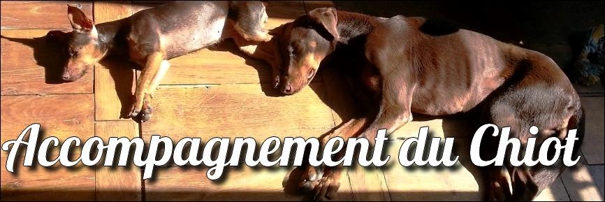 educateur-canin-comportementaliste-chien-nancy-education-chiot
