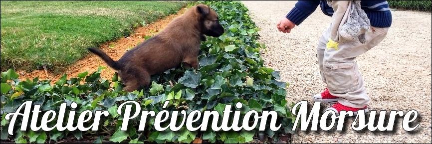 educateur-canin-comportementaliste-chien-prévention-morsure