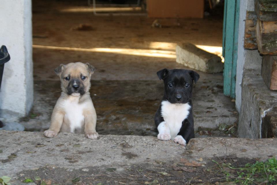 adoption_chien_chiot