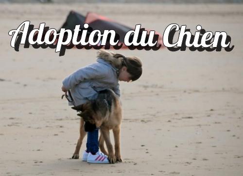 adoption_chien