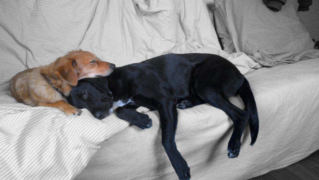 adoption_chien_conseil_autre_chiens