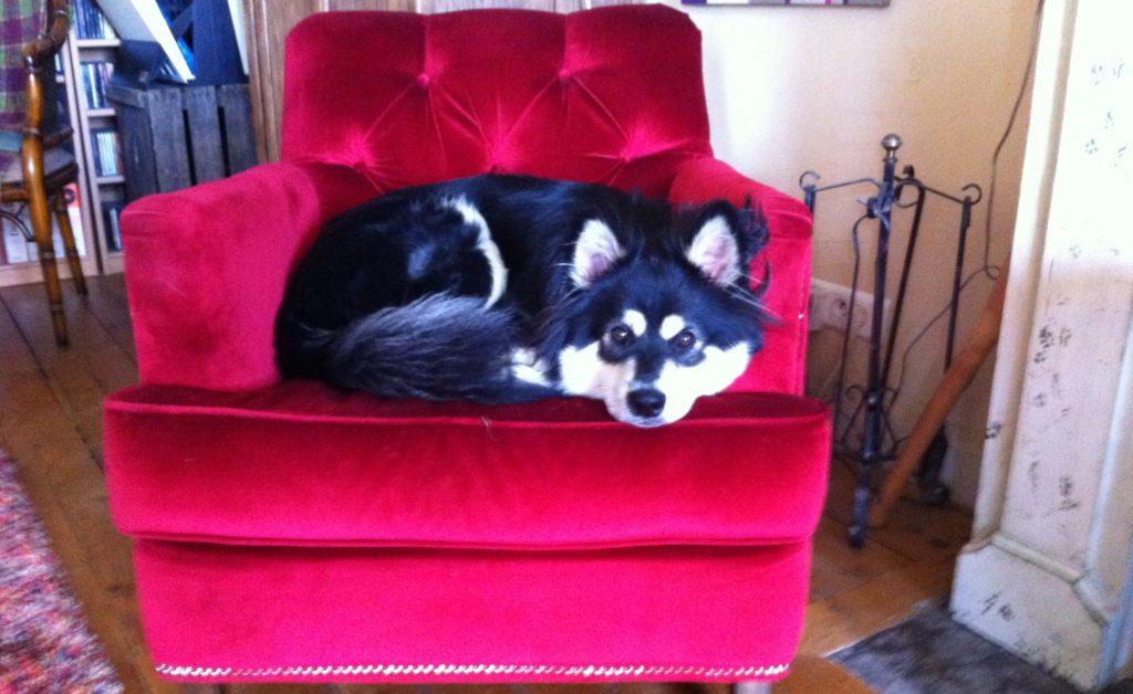 adoption_chien_besoins