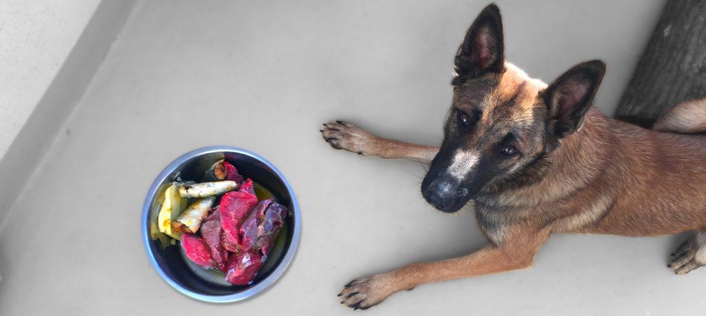 coaching-alimentation-cétogène-cétose-chien-alimentation-chien-anticancer