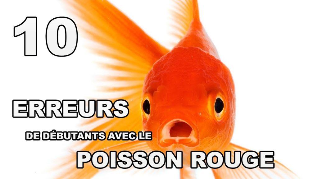 adoption_chien_poisson_rouge