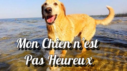mon_chien_est_heureux