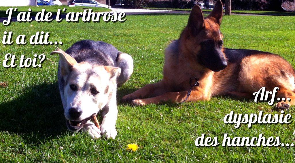 arthrose_chien_cétogène