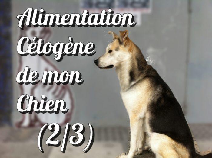 cétose_keto_chien_alimentation