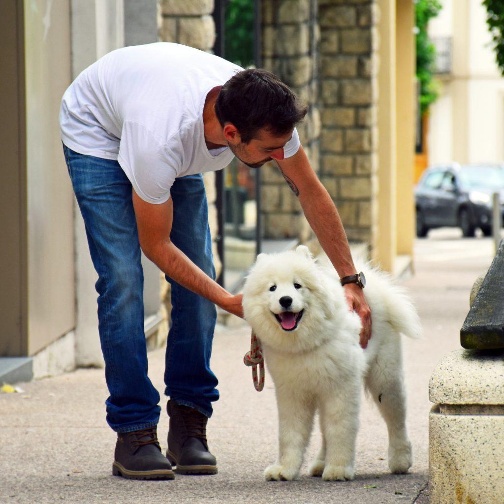 éducateur canin besançon comportementaliste chien