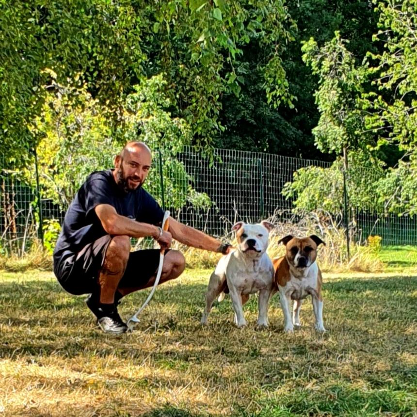 formation-maitre-chien-categorie-besançon-american-staff-obligatoire