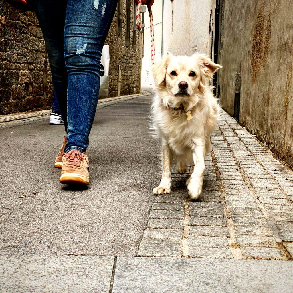 bilan-comportemental-chien-socialisation-éducateur-canin-comportementaliste